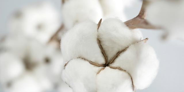 polymère issu du coton